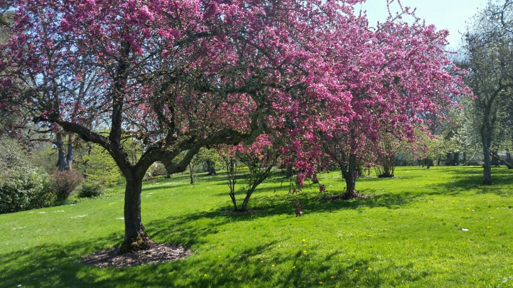 This image has an empty alt attribute; its file name is spring-in-bush-park-1024x576.jpg